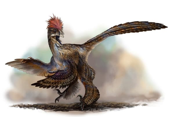 anchiornis_huxleyi_by_cheungchungtat-d31r8u5