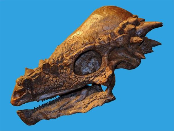 Calavera de dinosaurio
