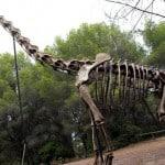 reproducción a esqueleto del brachiosaurus del museo
