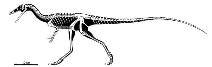 Características del Compsognathus