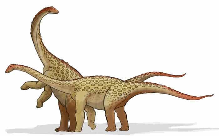 dibujo-saltasaurus