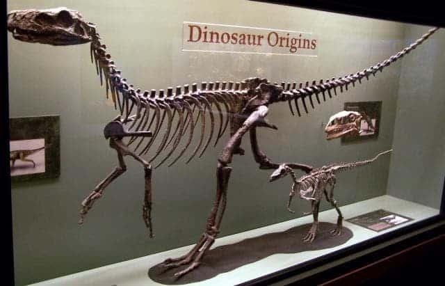 El pequeño Micropachycephalosaurus al lado de un Eoraptor