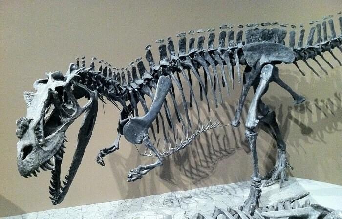 Reecontrucción del Ceratosaurus