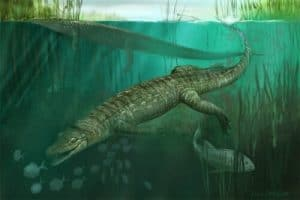 Pachycheilosuchus