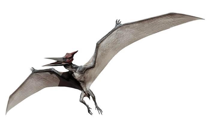 Dibujo de un Pteranodon