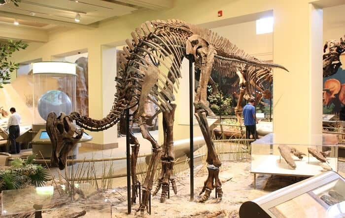 Reeconstrucción de un Corythosaurus