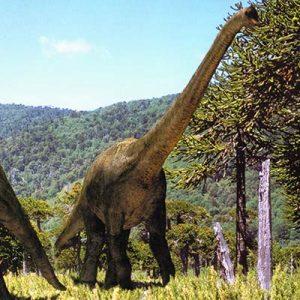 Brachiosaurus – dinosaurio herbívoro