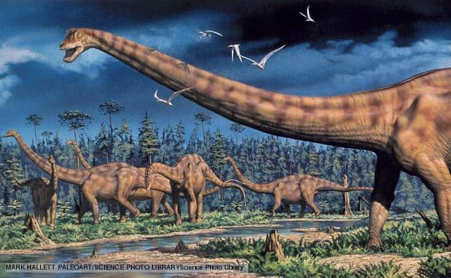 Diplodocus – dinosaurio gigante