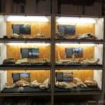 Museu de l'institut català de paleontologia