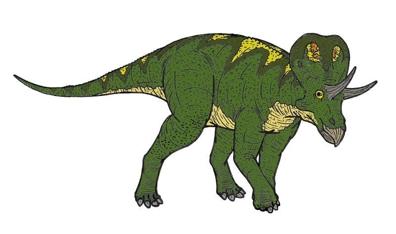 dibujo zuniceratops