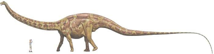 Tamaño del Ultrasaurus