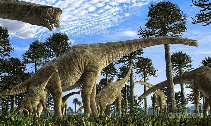 Descubrimiento del Giraffatitan