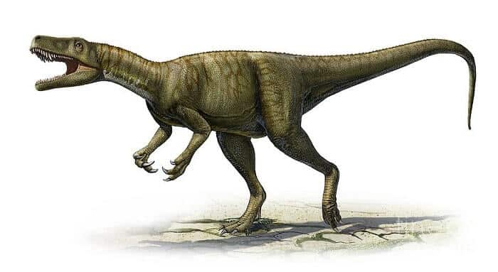 Dibujo de un Herrerasaurus