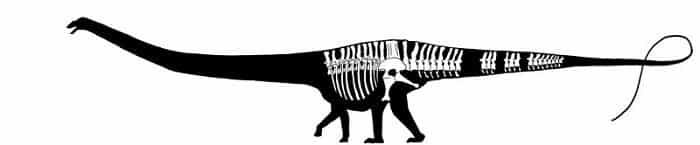 Descripción del Seismosaurus