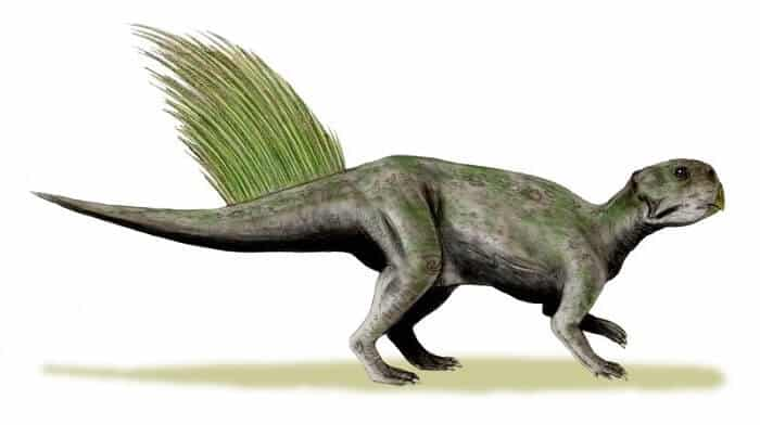 Dibujo de un Psittacosaurus