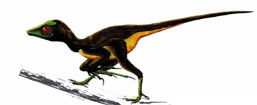 epidendrosaurus dinosaurio enano