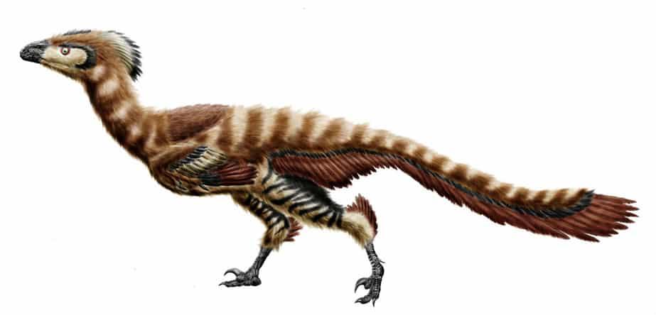 epidexipteryx dinosaurios mas pequeños