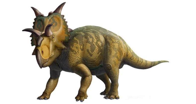 pentaceratops hervivoro de los dinosaurios más peligrosos