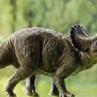 alimentacion-triceratops