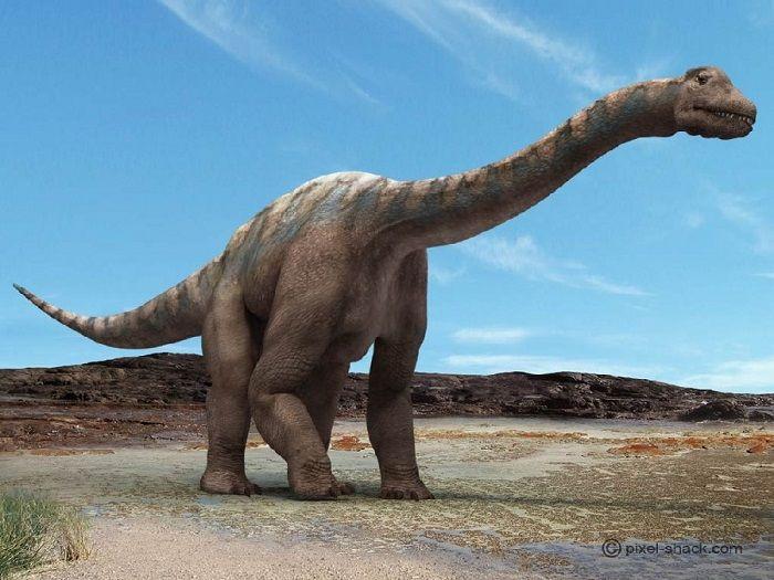 El Argentinosaurus tenía un cuello largo