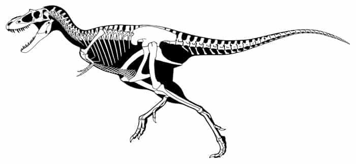 Características del Albertosaurus