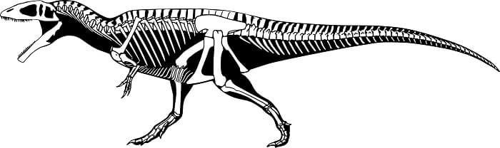 Descripción del Carcharodontosaurus