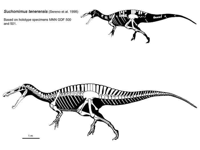 Descripción del Suchomimus