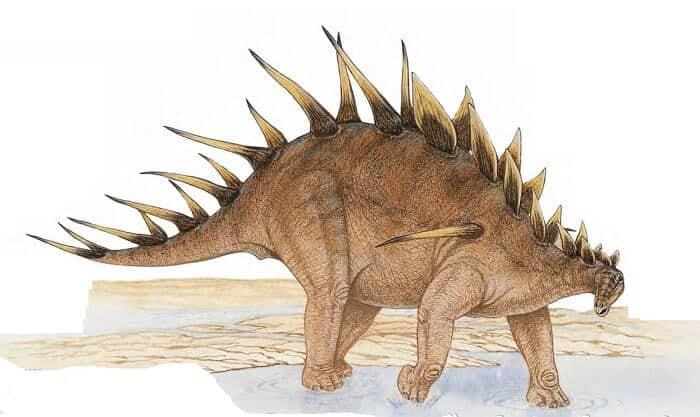 Dibujo de un Kentrosaurus