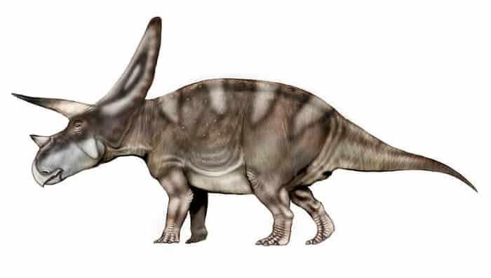 Dibujo de un Torosaurus