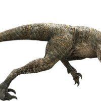 dibujo-velociraptor
