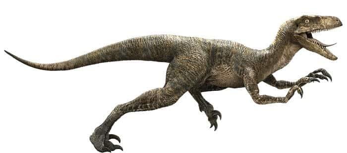 Dibujo de un Velociraptor