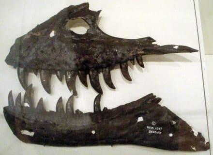 mandibula-albertosaurus