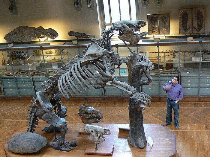 Descubrimiento del Megatherium