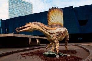 spinosaurus - en el museo de barcelona