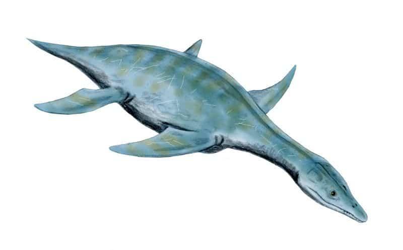 plesiosaurio un terror marino