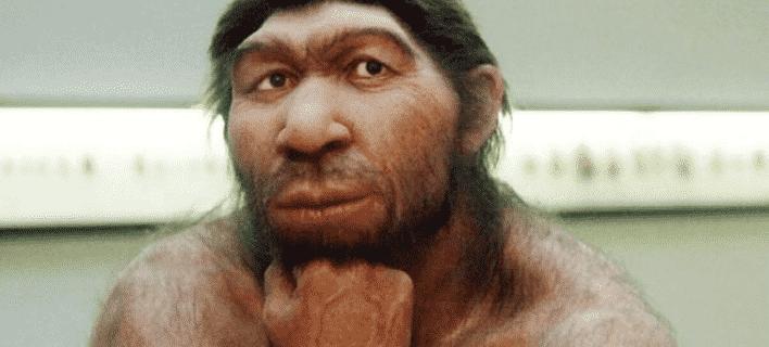 homo neandertal