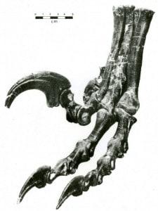 partes cuerpo dinosaurios