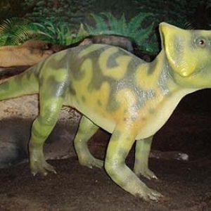 Leptoceratops – dinosaurio herbivoro