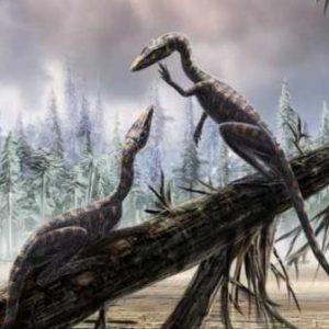 Procompsognathus- dinosaurio carnívoro