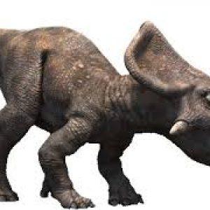 Protoceratops – dinosaurio herbivoro
