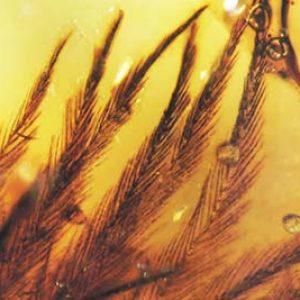 plumas fosilizadas en ambar