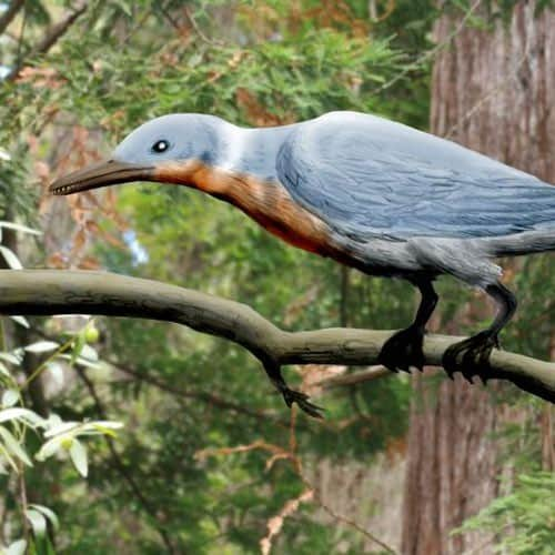 Concornis - ave prehistorica