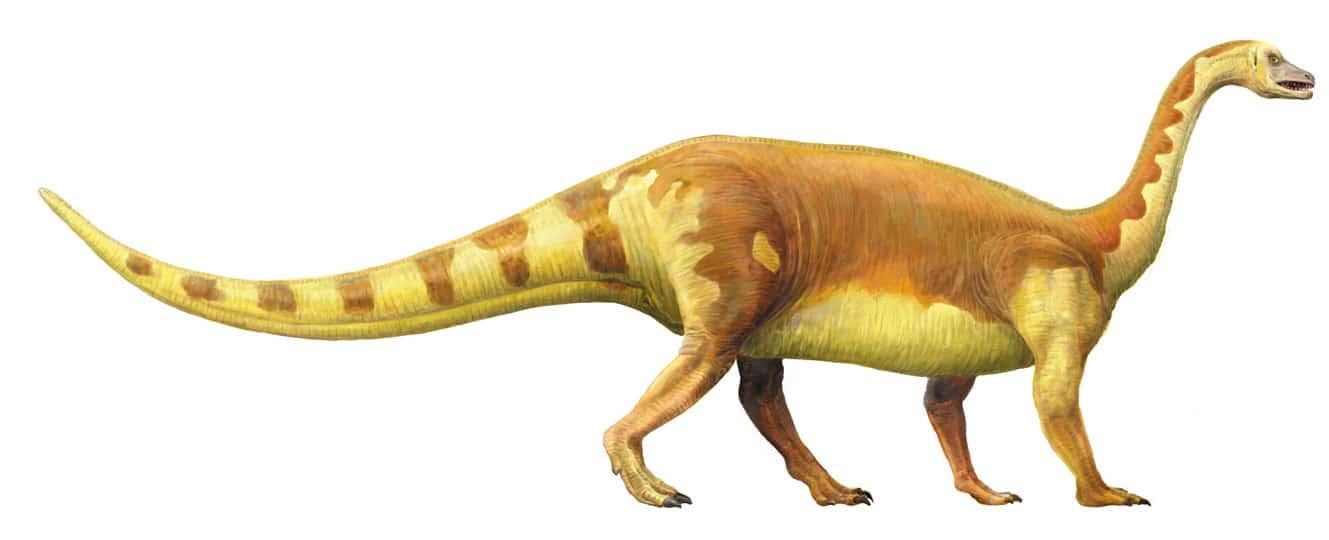 dinosaurio Aliwalia