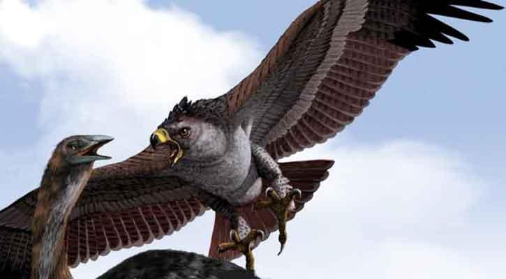 Harpagornis - ave prehistorica
