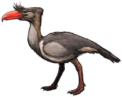 Kelenken - ave prehistorica
