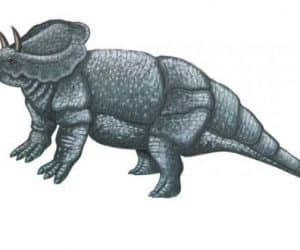 dinosaurio ceratops